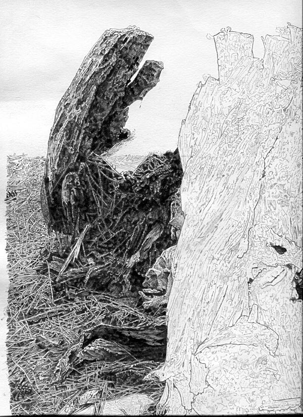 木を描く13作目2.jpg