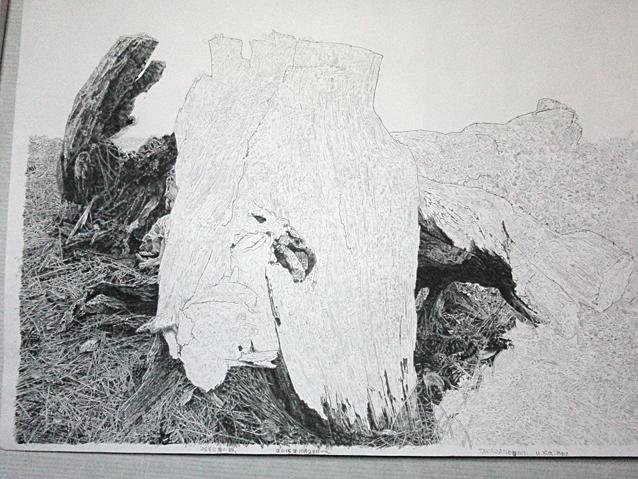 木を描く13作目5.jpg