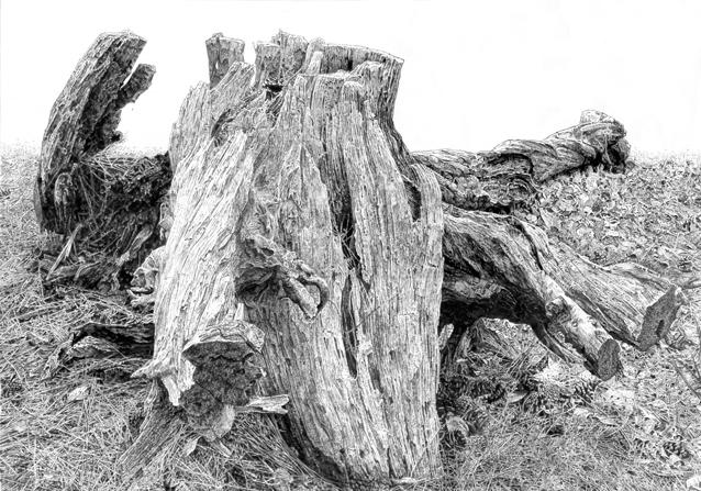 木を描く13作目ブログ.jpg