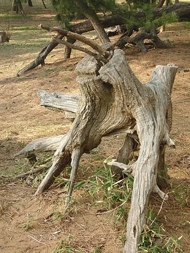 木を描く14作目候補3.jpg