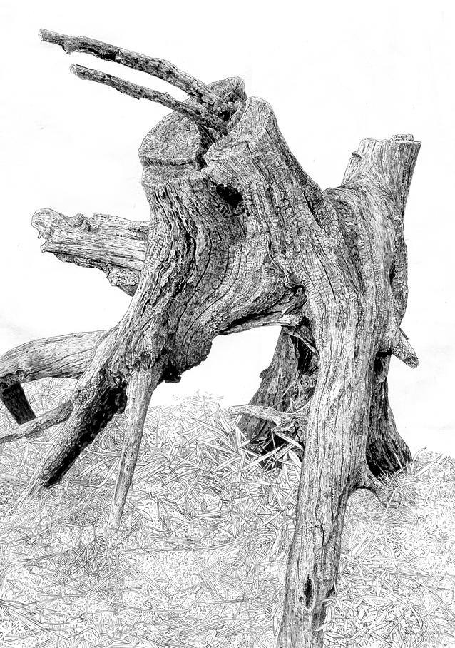 木を描く15作目.jpg