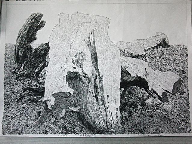 木を描く経過.jpg