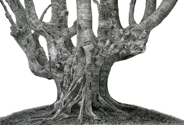 鳥海山のブナの木.原寸.jpg