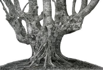 鳥海山のブナの木.大.jpg